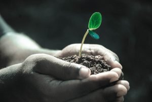 closeup of hands holding soil and a budding plant